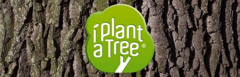 CO2-Reduzierung durch Bäume pflanzen